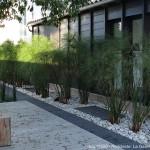 plantes, jardin, terrasse
