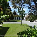 jardin, arbres, île de ré