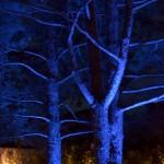 arbre, nuit, maison
