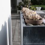 fleurs, terrasse, île de ré
