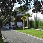 arbres, île de ré, végétation